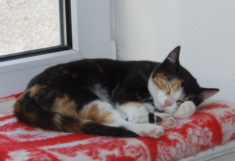 Unsere Katze Lilly